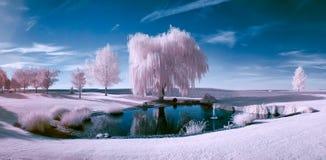 Cena infravermelha de uma lagoa e de árvores fotos de stock
