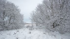 Cena inglesa da paisagem do inverno imagem de stock royalty free