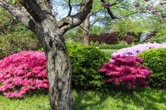 Cena japonesa do jardim Fotografia de Stock Royalty Free