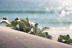 Cena litoral 1 Imagens de Stock