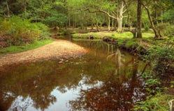 Cena luxúria bonita da floresta com córrego Fotos de Stock
