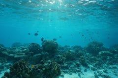 Cena natural do recife de corais raso subaquático do mar fotografia de stock royalty free
