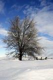 Cena nevado da pradaria Fotos de Stock Royalty Free