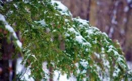 Cena nevando do inverno com as árvores no fundo Imagens de Stock Royalty Free