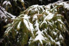 Cena nevando do inverno com as árvores no fundo Fotografia de Stock