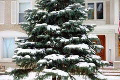 Cena nevando do inverno com as árvores no fundo Foto de Stock Royalty Free