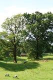 Cena pastoral de Cumbrian Imagens de Stock