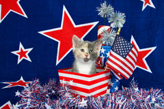 Cena patriótica do gatinho da chita Fotografia de Stock