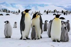Cena polar do Antarctic foto de stock
