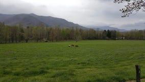 Cena primitiva do leste da natureza de Tennessee Sevierville Pigeon Forge Gatlinburg das montanhas fumarentos da angra de Cades Fotos de Stock Royalty Free
