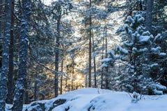 Cena retroiluminada do inverno Imagem de Stock