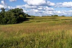 Cena rural Fotografia de Stock