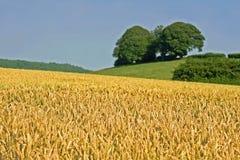 Cena rural Imagens de Stock