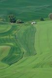 Cena rural do campo de trigo imagem de stock royalty free
