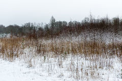 Cena rural do inverno com névoa e campos brancos Imagem de Stock