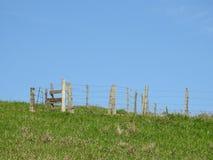 Cena rural: um cerco vazio do gado em um campo gramíneo imagens de stock