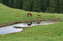 Cena sereno da montanha com animais de exploração agrícola Foto de Stock Royalty Free