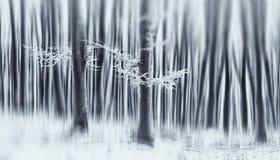 Cena sonhadora da floresta do inverno com geada em árvores Imagem de Stock Royalty Free