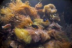 Cena subaquática imagem de stock
