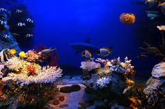 Cena subaquática fotos de stock