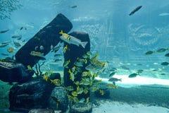 Cena subaquática Fotografia de Stock Royalty Free