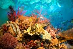 Cena subaquática Imagens de Stock