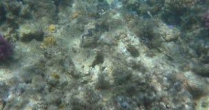 Cena subaquática com plantas e corais de mar vídeos de arquivo