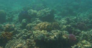 Cena subaquática com recife de corais e peixes vídeos de arquivo