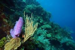 cena subaquática do recife coral fotografia de stock royalty free