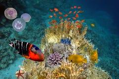 Cena subaquática, mostrando os peixes coloridos diferentes que nadam Fotos de Stock Royalty Free