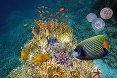 Cena subaquática, mostrando os peixes coloridos diferentes que nadam Fotos de Stock