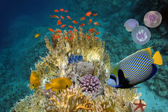 Cena subaquática, mostrando os peixes coloridos diferentes que nadam Fotografia de Stock Royalty Free