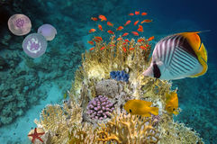Cena subaquática, mostrando os peixes coloridos diferentes que nadam Fotografia de Stock