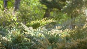 Cena tranquilo da manhã da clareira na floresta video estoque