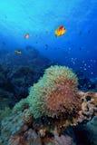 Cena tropical subaquática do recife foto de stock