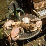 Cena vecchio Hastings - argomento di riflessione dei frutti di mare! Immagini Stock Libere da Diritti