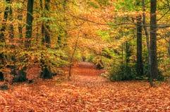 Cena vibrante bonita da floresta da queda do outono Imagem de Stock