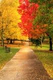 Cena vibrante bonita da floresta da queda do outono Imagens de Stock