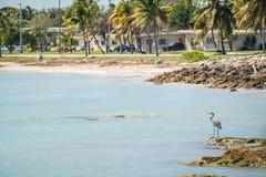 Cenas bonitas da praia e do oceano em chaves de florida Imagens de Stock Royalty Free