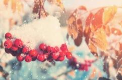 cendre de montagne couverte de neige Image libre de droits