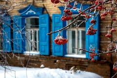 Cendre de montagne dans le jardin d'hiver couvert de gel photographie stock