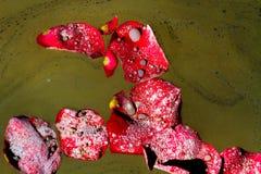 Cendres et Rose Petals dispersées Photographie stock