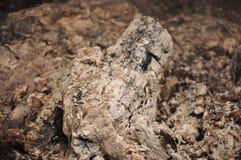 Cendres et saleté après griller Image stock