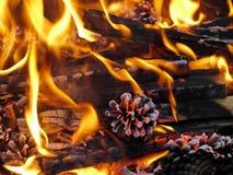 Cenere bruciante del fuoco Fotografia Stock Libera da Diritti