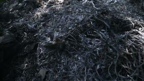 Cenere di erba e di detriti archivi video