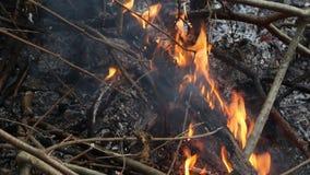 Cenere e fumo di calore dal falò Calore accumulato con riscaldamento globale O siamo la causa di questo problema video d archivio