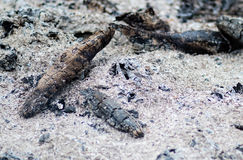 Ceneri bruciate Immagine Stock Libera da Diritti