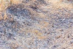 Ceniza de campos ardientes del arroz Imagenes de archivo