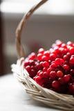 Ceniza roja en cesta Fotografía de archivo libre de regalías
