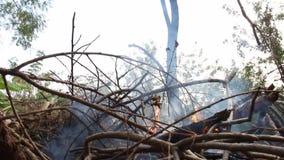 Ceniza y humo del calor de la hoguera Calor acumulado con el calentamiento del planeta O somos la causa de este problema almacen de video